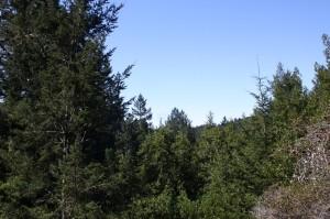 redwood5